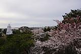2014sakura3_2
