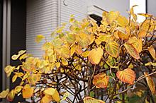 Tosamizuki_201411_2