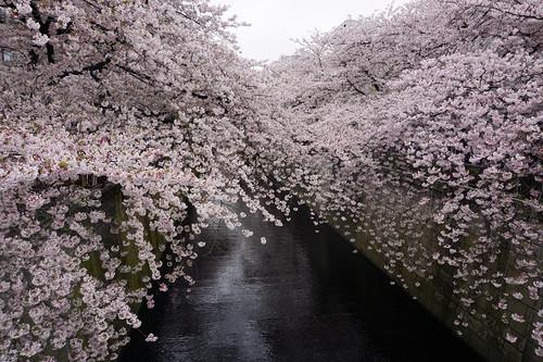 Sakura_201802